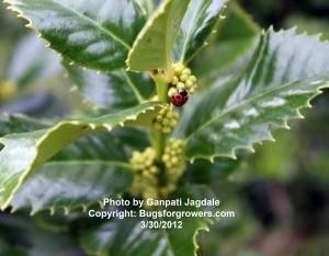 """""""The ladybug"""""""