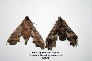 """""""The Moths"""""""